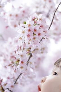 いちかちゃんと桜